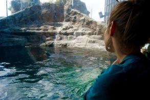 Reina's Favorite Animal: Sea Otter