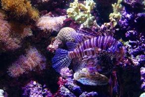 First Stop: Seattle Aquarium